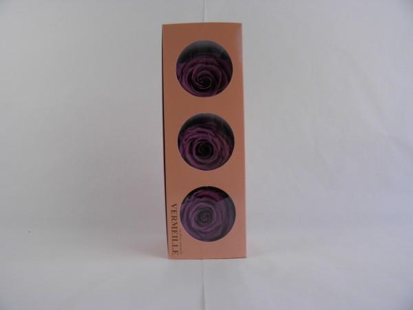 Gefrier Rose Lilac